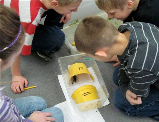 students looking at a bug in a box